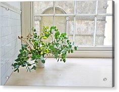 House Plant Acrylic Print by Tom Gowanlock