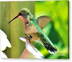 Hummingbird 3 2014 Acrylic Print by Judy Via-Wolff