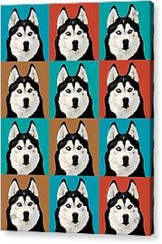 Husky Pop Art Acrylic Print by Susan Stone