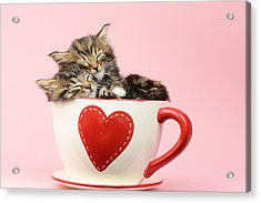 It Must Be Love Acrylic Print by Greg Cuddiford