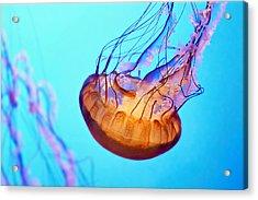 Jelly #3 Acrylic Print by Nikolyn McDonald