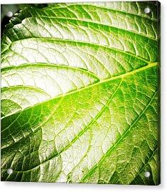 Leaf Acrylic Print by Les Cunliffe