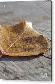 Leaves Acrylic Print by Jennifer Kimberly