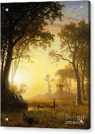 Light In The Forest Acrylic Print by Albert Bierstadt
