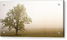 Lost In The Fog Acrylic Print by Andrew Soundarajan