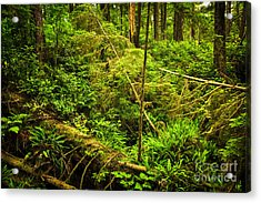 Lush Temperate Rainforest Acrylic Print by Elena Elisseeva