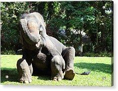 Maesa Elephant Camp - Chiang Mai Thailand - 01131 Acrylic Print by DC Photographer