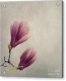 Magnolia Acrylic Print by Jelena Jovanovic