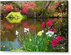 Magnolia Plantation And Gardens Acrylic Print by Iris Greenwell