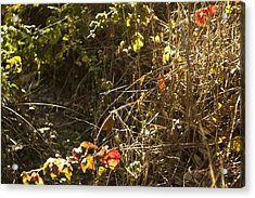 March Larry Darnell Acrylic Print by Larry Darnell