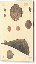 Molluscs Acrylic Print by Natural History Museum, London