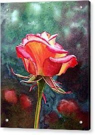 Morning Rose Acrylic Print by Irina Sztukowski