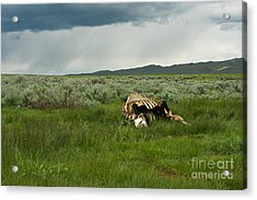 Nature's Storms Acrylic Print by Birches Photography