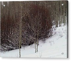 Old Powderhorn Acrylic Print by Anne Back