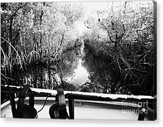On Board An Airboat Ride Through A Mangrove Jungle In Everglades City Florida Everglades Usa Acrylic Print by Joe Fox