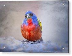 On Cloud Nine Acrylic Print by Bonnie Barry