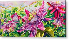 Passionflower Party Acrylic Print by Janis Grau