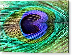 Peacock Feather Acrylic Print by Heike Hultsch