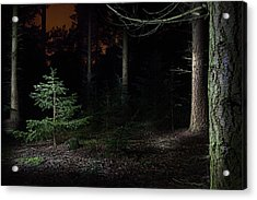 Pine Trees New Life Acrylic Print by Dirk Ercken