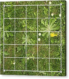 Quadrat On A Lawn With Weeds Acrylic Print by Science Photo Library