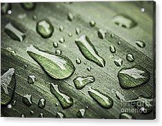 Raindrops On Leaf Acrylic Print by Elena Elisseeva