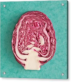 Red Cabbage Acrylic Print by Tom Gowanlock