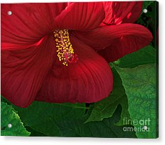 Red Acrylic Print by Robert Pilkington