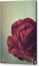 Red Rose Acrylic Print by Jelena Jovanovic