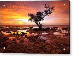 Reverence  Acrylic Print by Patrick Downey