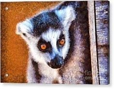 Ring Tailed Lemur Acrylic Print by George Atsametakis