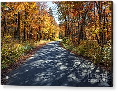 Road In Fall Forest Acrylic Print by Elena Elisseeva