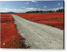 Road Through Autumn Blueberry Maine Acrylic Print by Scott Leslie