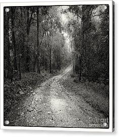 Road Way In Deep Forest Acrylic Print by Setsiri Silapasuwanchai