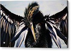 Rock On Acrylic Print by Paulette Thomas