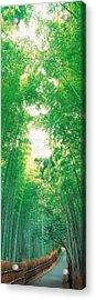Sagano Kyoto Japan Acrylic Print by Panoramic Images