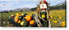 Scarecrow In Pumpkin Patch, Half Moon Acrylic Print by Panoramic Images