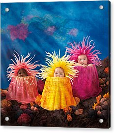 Sea Anemones Acrylic Print by Anne Geddes
