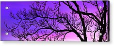 Silhouette Of A Tree At Dusk Acrylic Print by Panoramic Images