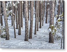 Snowy Woods Acrylic Print by Donna Doherty