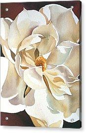 Southern Magnolia Acrylic Print by Alfred Ng