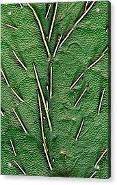 Soybean Leaf Trichomes Acrylic Print by Stefan Diller