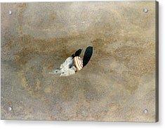 Soyuz 29 Landing Acrylic Print by Nasa/detlev Van Ravenswaay