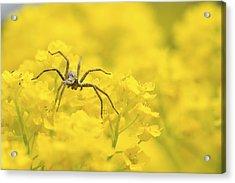 Spider Acrylic Print by Jaroslaw Grudzinski