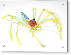 Spider Acrylic Print by Tomasz Litwin