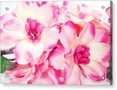 Spring Flowers  Acrylic Print by Michal Bednarek