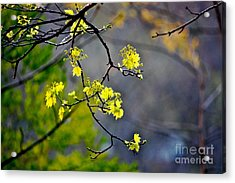 Spring Leaves Acrylic Print by Jay Nodianos