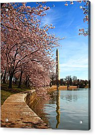 Spring Acrylic Print by Mitch Cat