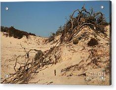 St Joseph Sand Dunes Acrylic Print by Adam Jewell