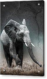 Stone Texture Elephant Acrylic Print by Mike Gaudaur