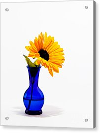 Study In Blue Acrylic Print by Cecil Fuselier
